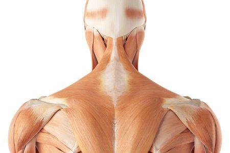 Dolor cervical - Descubre como solucionar problemas de discos vertebrales